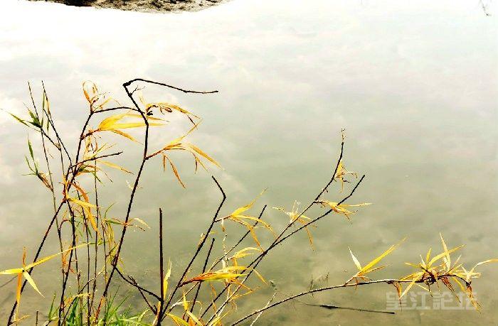 冬日晴暖,在水之湄