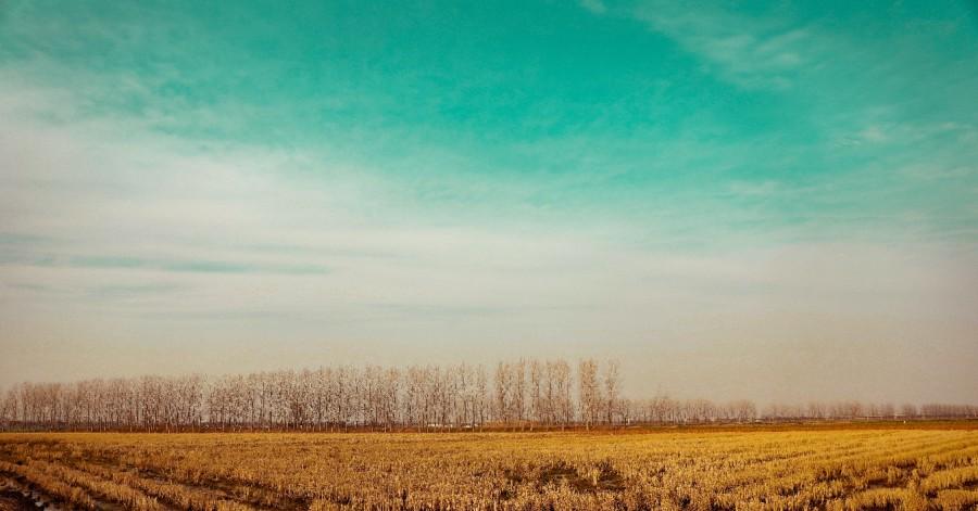 冬天里收割完的稻田